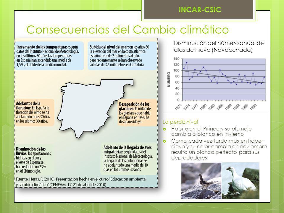 Consecuencias del Cambio climático Disminución del número anual de días de nieve (Navacerrada) La perdiz nival Habita en el Pirineo y su plumaje cambi