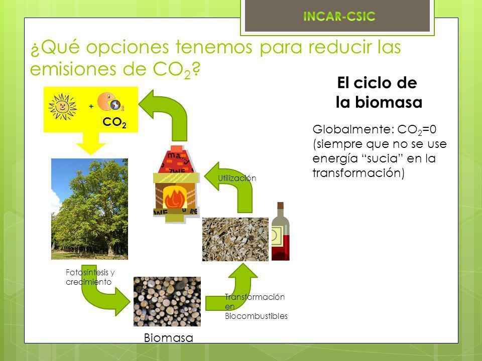 El ciclo de la biomasa Globalmente: CO 2 =0 (siempre que no se use energía sucia en la transformación) + Fotosíntesis y crecimiento Biomasa Transforma