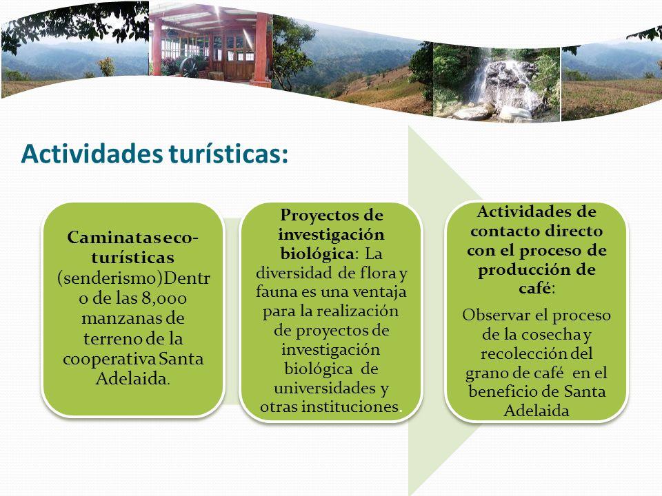 Actividades turísticas: Caminatas eco- turísticas (senderismo)Dentr o de las 8,000 manzanas de terreno de la cooperativa Santa Adelaida.