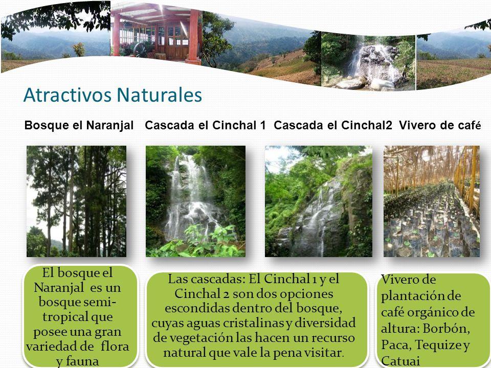 Atractivos Naturales Bosque el Naranjal Cascada el Cinchal 1 Cascada el Cinchal2 Vivero de caf é El bosque el Naranjal es un bosque semi- tropical que