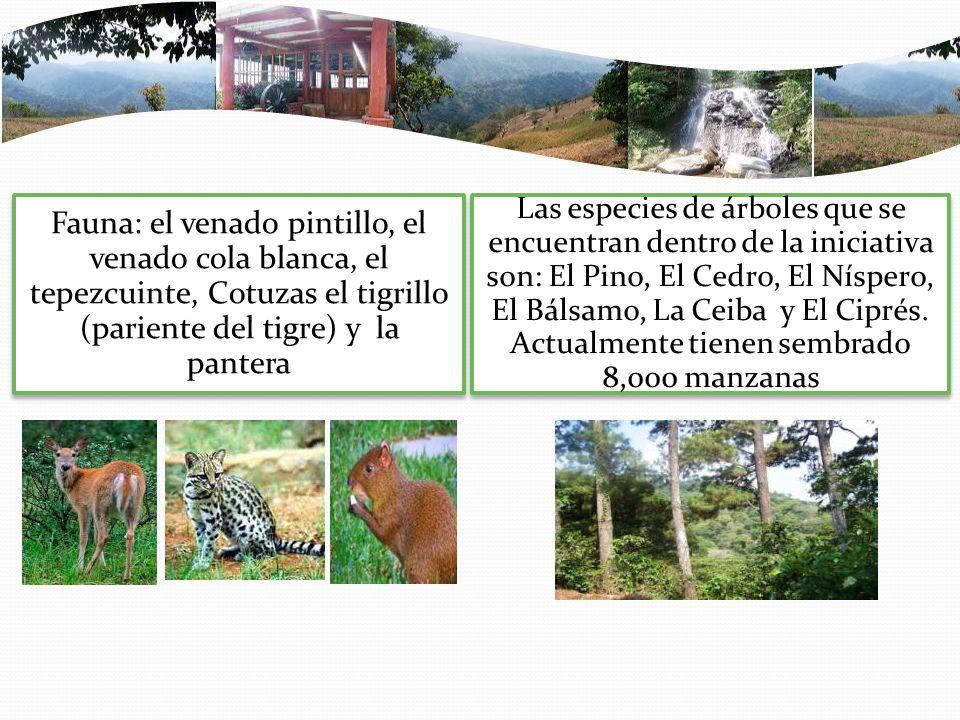 Fauna: el venado pintillo, el venado cola blanca, el tepezcuinte, Cotuzas el tigrillo (pariente del tigre) y la pantera Las especies de árboles que se encuentran dentro de la iniciativa son: El Pino, El Cedro, El Níspero, El Bálsamo, La Ceiba y El Ciprés.