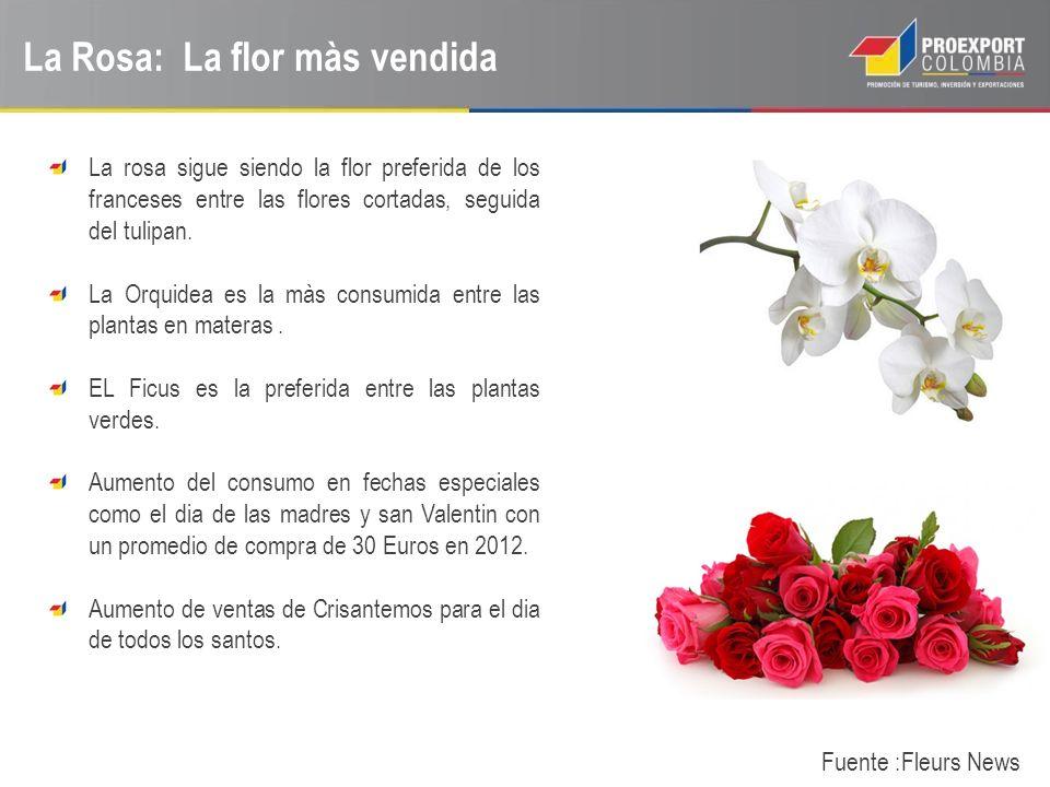 La Rosa: La flor màs vendida Fuente :Fleurs News La rosa sigue siendo la flor preferida de los franceses entre las flores cortadas, seguida del tulipa