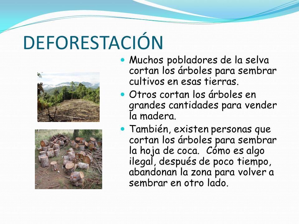 DEFORESTACIÓN Muchos pobladores de la selva cortan los árboles para sembrar cultivos en esas tierras. Otros cortan los árboles en grandes cantidades p