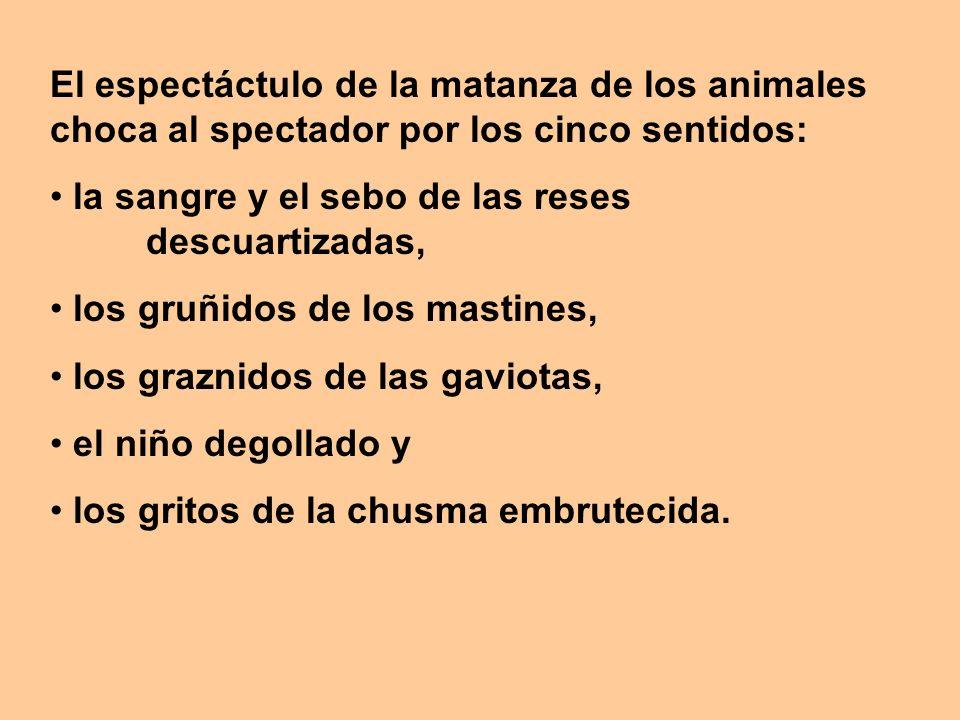 El espectáctulo de la matanza de los animales choca al spectador por los cinco sentidos: la sangre y el sebo de las reses descuartizadas, los gruñidos