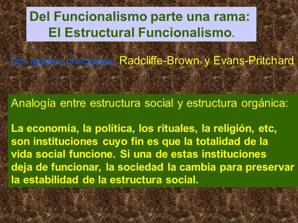 Del Funcionalismo parte una rama: El Estructural Funcionalismo. Dos autores principales: Radcliffe-Brown y Evans-Pritchard Analogía entre estructura s
