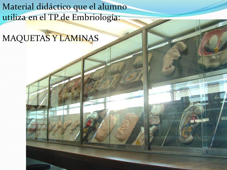 Material didáctico que el alumno utiliza en el TP de Embriología: MAQUETAS Y LAMINAS