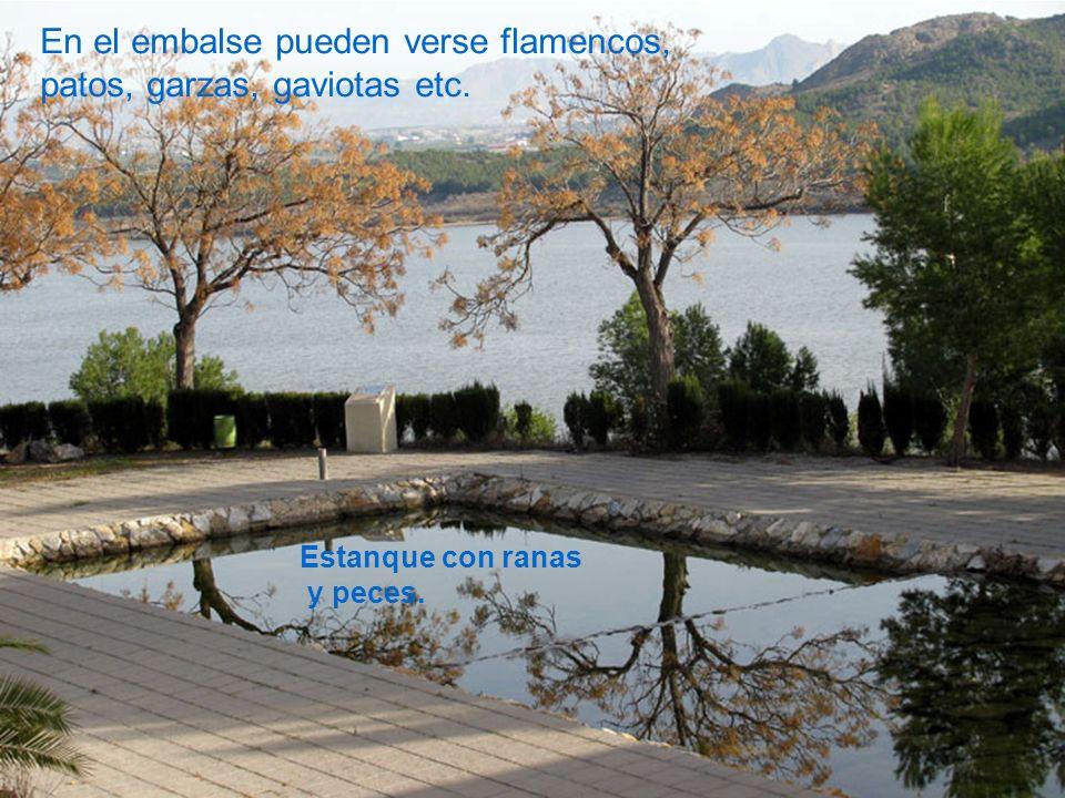Estanque con ranas y peces. En el embalse pueden verse flamencos, patos, garzas, gaviotas etc.