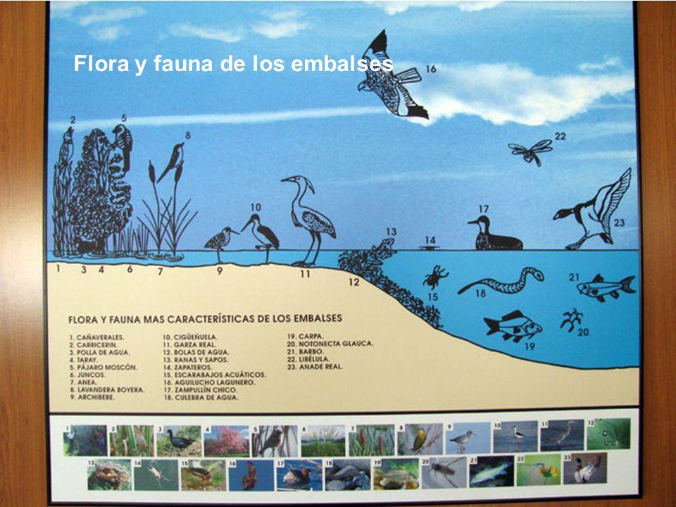 Flora y fauna de los embalses