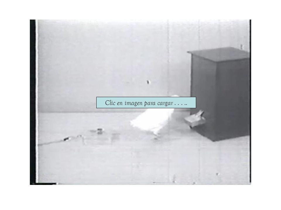 Práctica de laboratorio: caso de contingencia compuesta En equipos de cuatro estudiantes realicen lo siguiente: a)Soliciten a un adulto su consentimiento para participar en la práctica, b)Preparen formatos de registro de ocurrencia continua en 20 bloques de un minuto con subintervalos de 10 segundos cada uno, c)Distribuyan las mesas de trabajo del salón de modo que las actividades de su equipo no interfieran con el trabajo de los demás (para esto pueden utilizar un biombo que aísle su zona de trabajo), d)Coloquen al participante cómodamente sentado frente a una mesa, e)Sobre la mesa coloquen un botón conectado a un contador y dos lámparas (una con luz verde y otra con luz roja), de modo que cada 5 veces que se oprima el botón aumente en un dígito el valor en el contador siempre y cuando esté encendida la luz verde.
