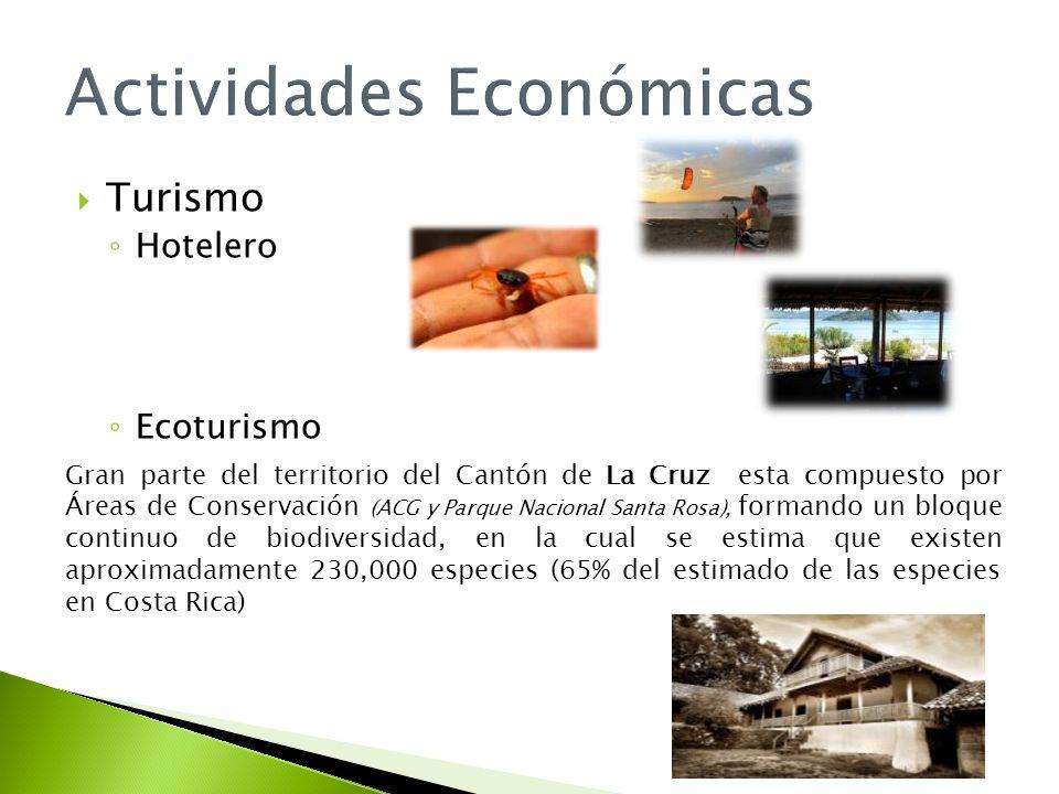 Turismo Hotelero Ecoturismo Gran parte del territorio del Cantón de La Cruz esta compuesto por Áreas de Conservación (ACG y Parque Nacional Santa Rosa