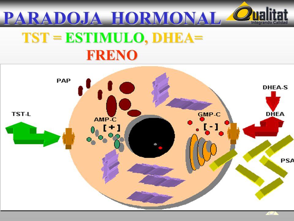 PARADOJA HORMONAL TST = ESTIMULO, DHEA= FRENO