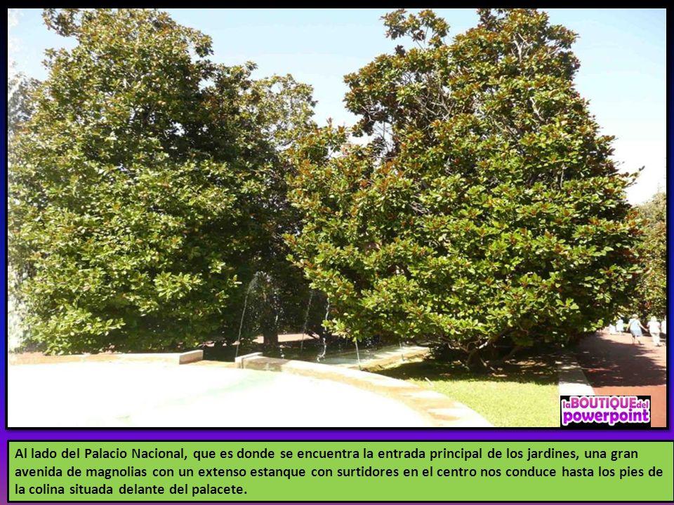 Al lado del Palacio Nacional, que es donde se encuentra la entrada principal de los jardines, una gran avenida de magnolias con un extenso estanque con surtidores en el centro nos conduce hasta los pies de la colina situada delante del palacete.