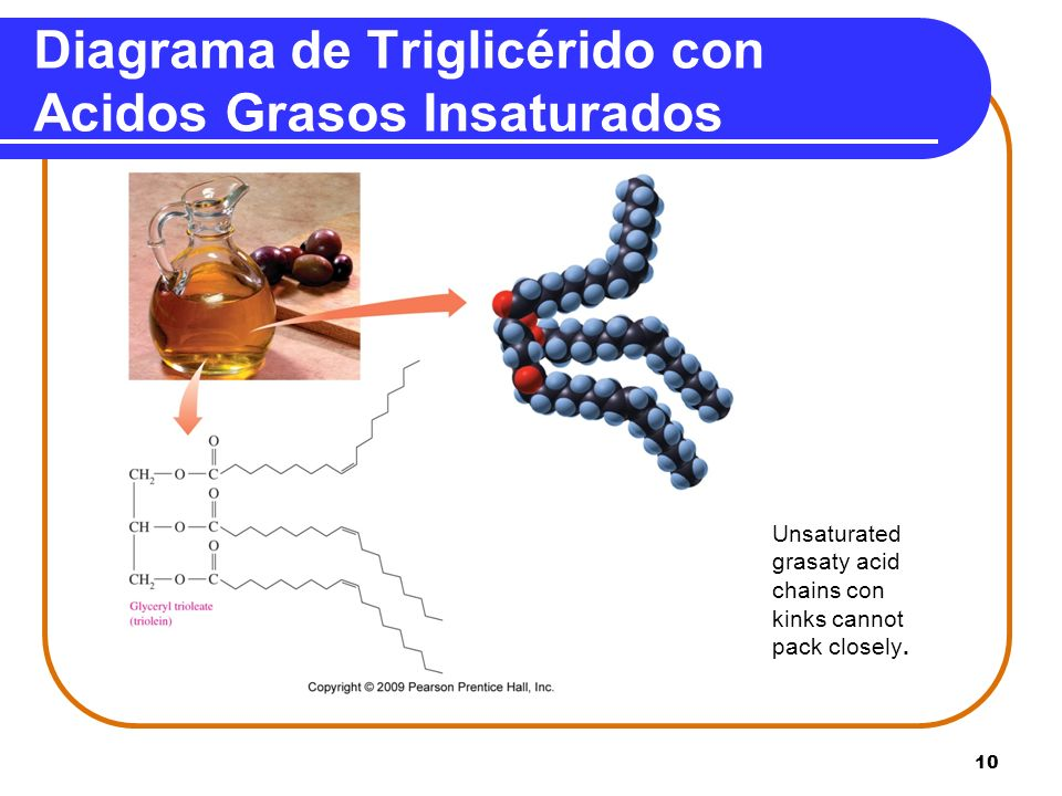 10 Diagrama de Triglicérido con Acidos Grasos Insaturados Unsaturated grasaty acid chains con kinks cannot pack closely.
