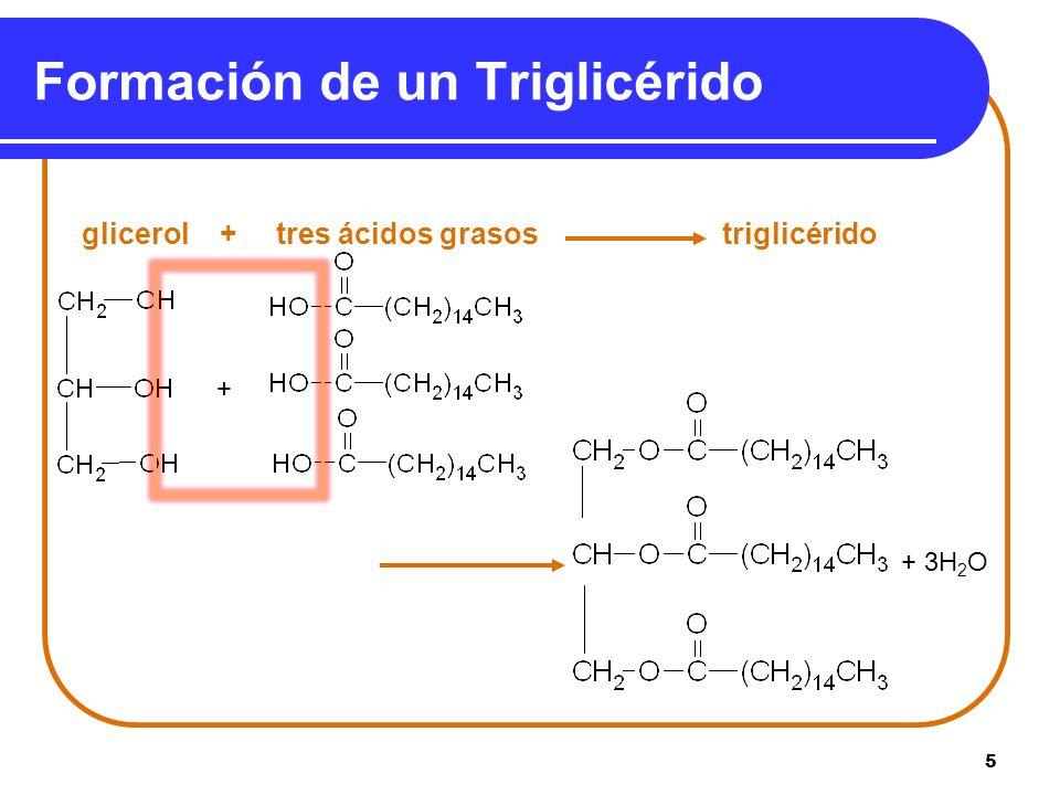 5 Formación de un Triglicérido glicerol + tres ácidos grasos triglicérido + 3H 2 O +
