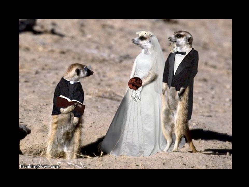 ¿Qué pasó entre el día de la boda y este día.