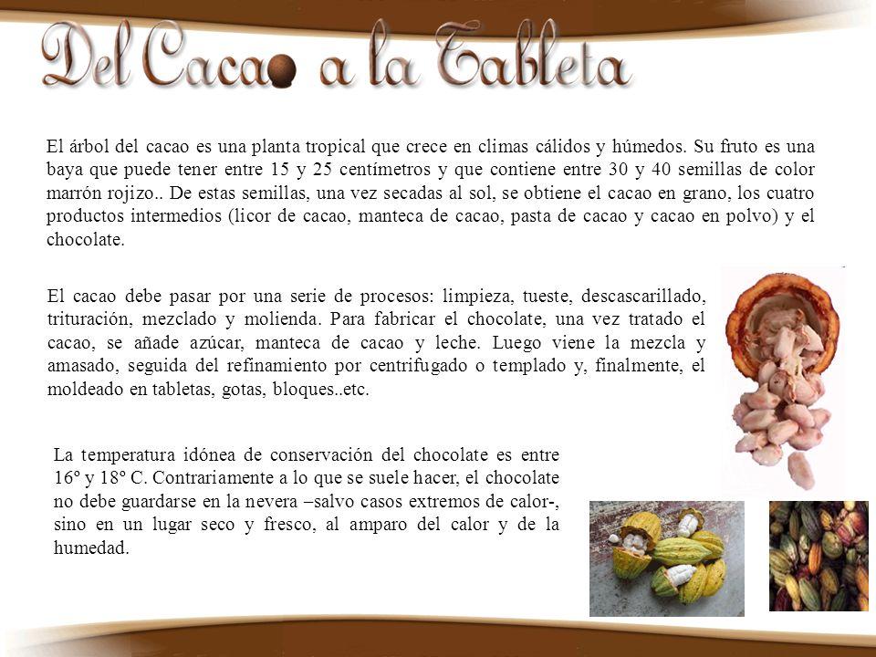 El árbol del cacao es una planta tropical que crece en climas cálidos y húmedos. Su fruto es una baya que puede tener entre 15 y 25 centímetros y que