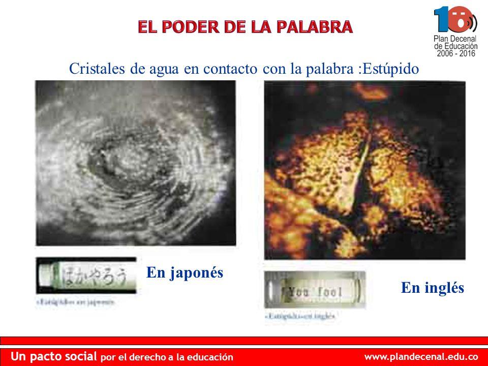 www.plandecenal.edu.co Un pacto social por el derecho a la educación Cristales de agua en contacto con la palabra :Estúpido En japonés En inglés
