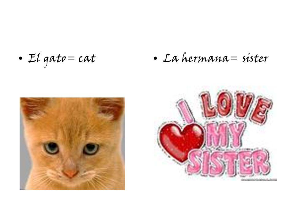El gato= catLa hermana= sister