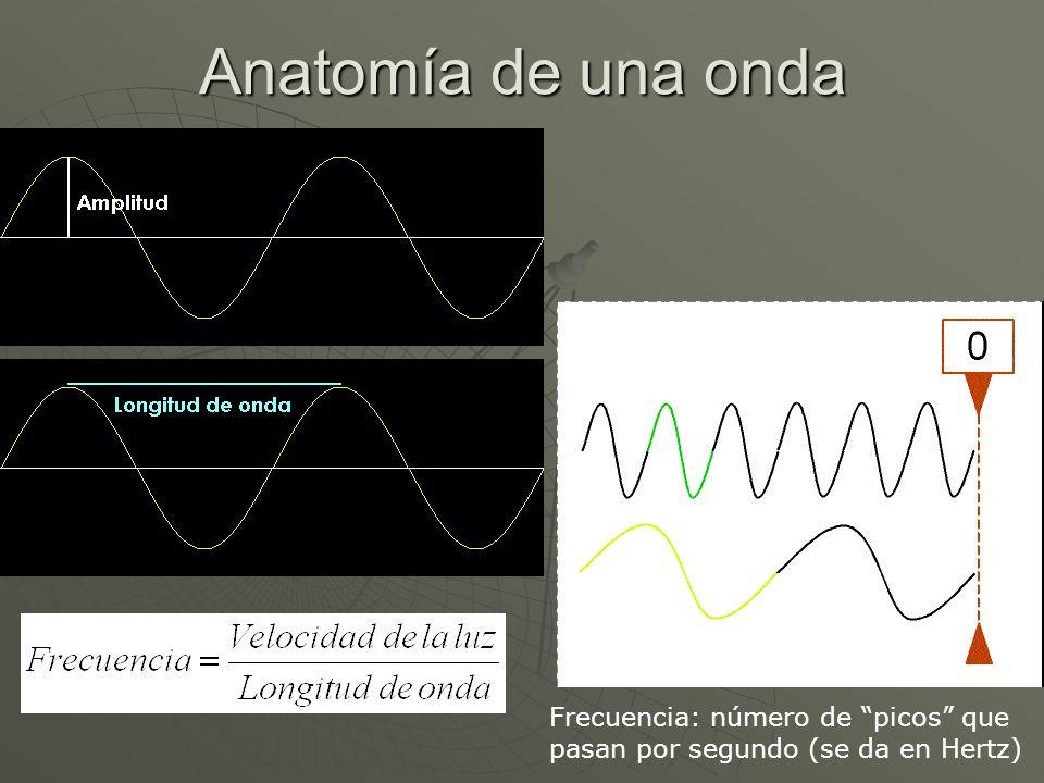 Anatomía de una onda Frecuencia: número de picos que pasan por segundo (se da en Hertz)
