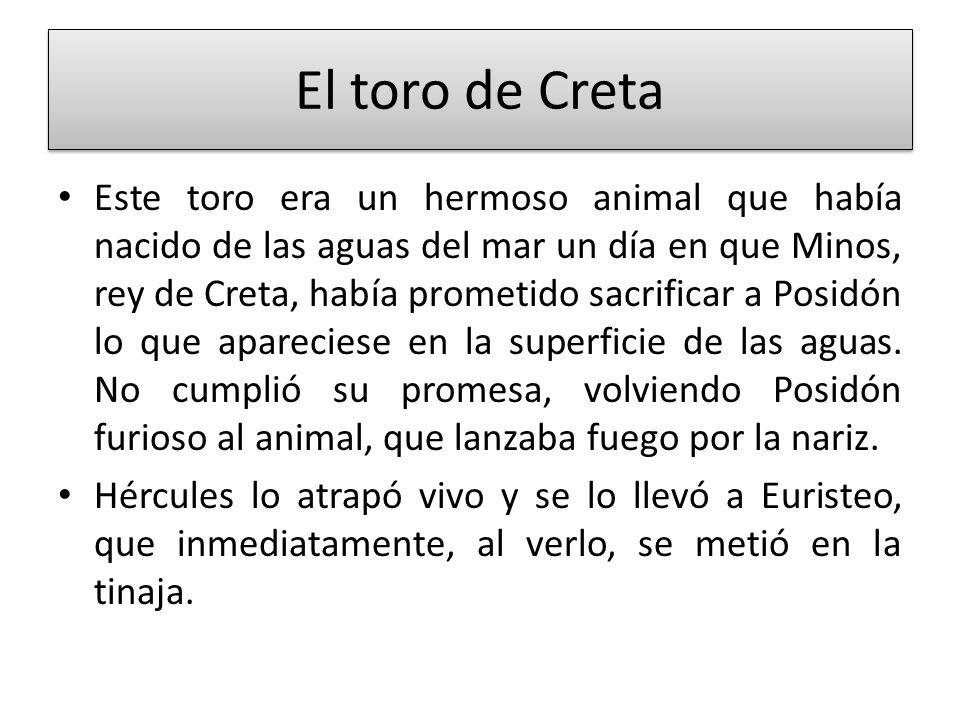 El toro de Creta Este toro era un hermoso animal que había nacido de las aguas del mar un día en que Minos, rey de Creta, había prometido sacrificar a
