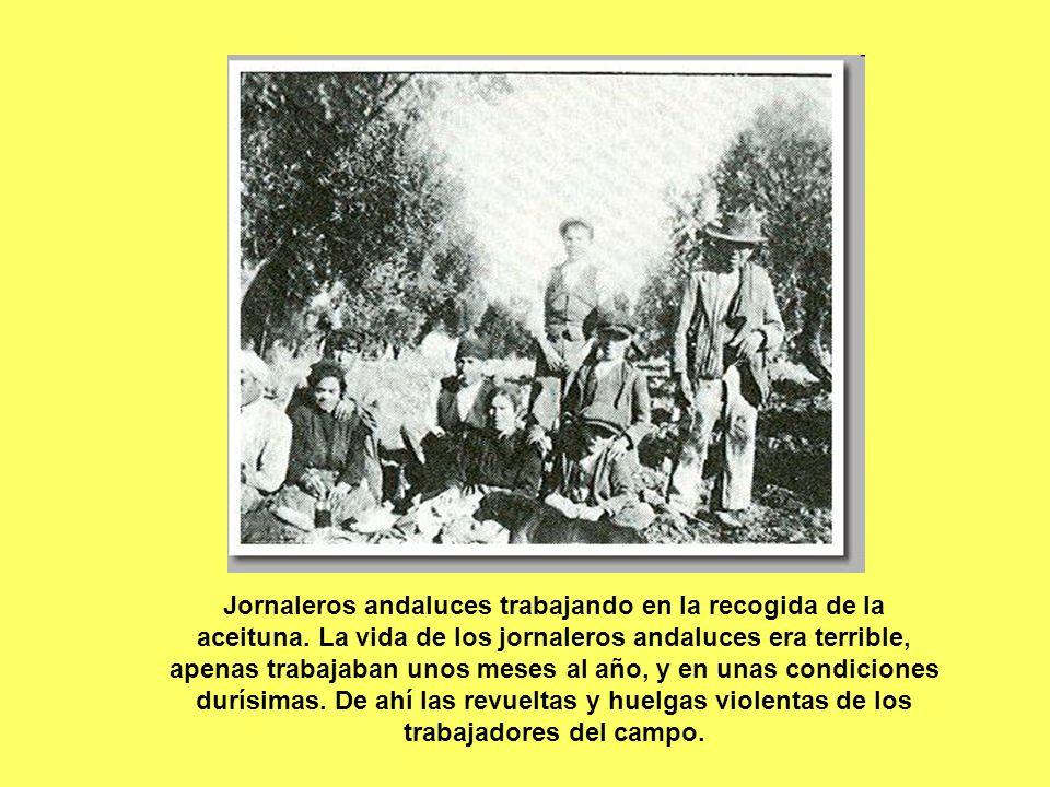 Jornaleros andaluces trabajando en la recogida de la aceituna. La vida de los jornaleros andaluces era terrible, apenas trabajaban unos meses al año,