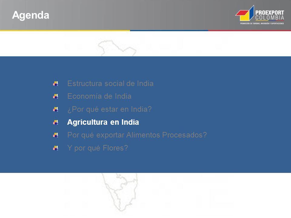 Agenda Estructura social de India Economía de India ¿Por qué estar en India? Agricultura en India Por qué exportar Alimentos Procesados? Y por qué Flo