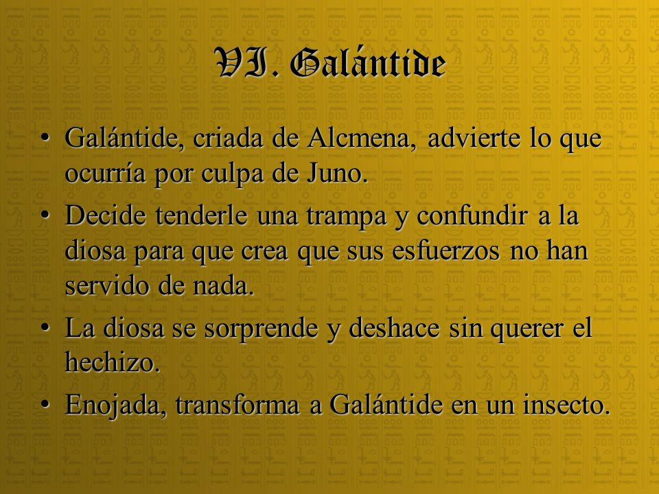 VI. Galántide Galántide, criada de Alcmena, advierte lo que ocurría por culpa de Juno. Galántide, criada de Alcmena, advierte lo que ocurría por culpa