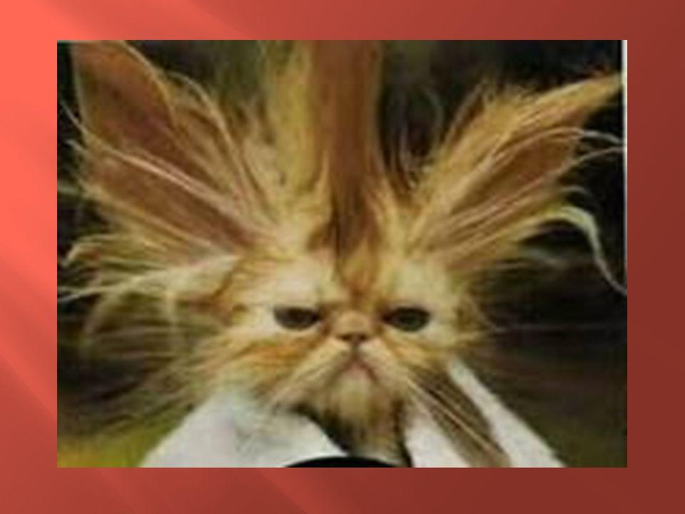 arreglarse el pelo