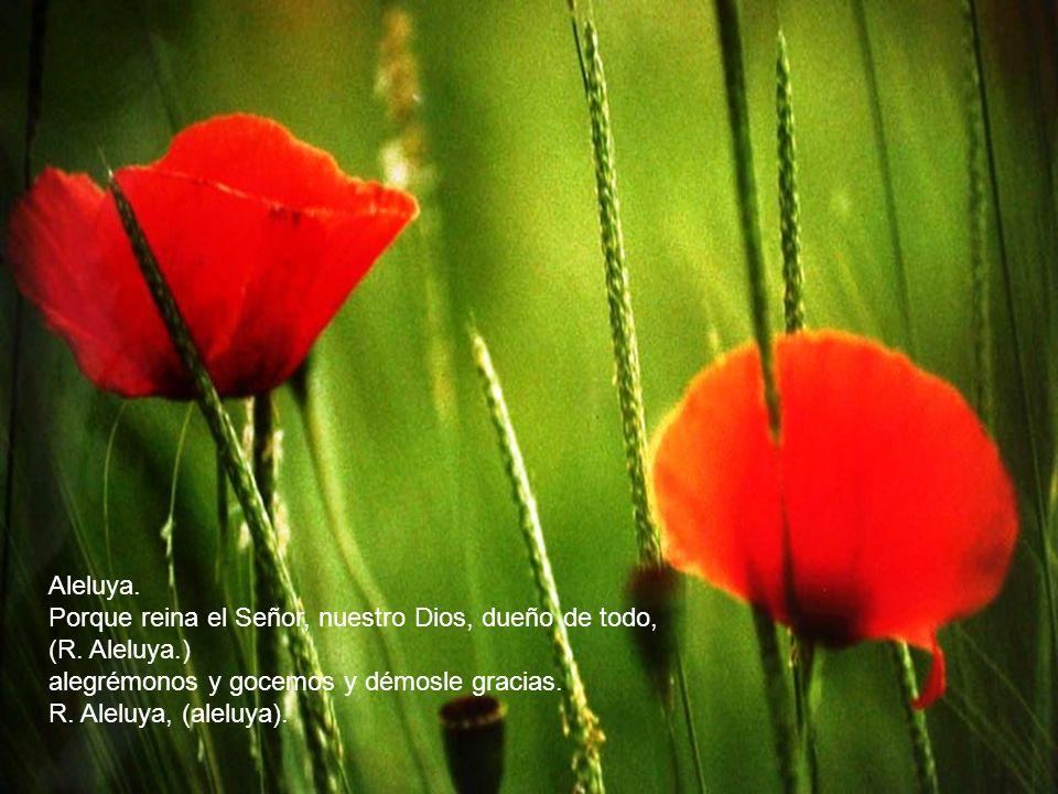 Aleluya. Alabad al Señor, sus siervos todos, (R. Aleluya.) los que le teméis, pequeños y grandes.