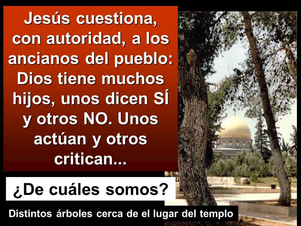 Jesús cuestiona, con autoridad, a los ancianos del pueblo: Dios tiene muchos hijos, unos dicen SÍ y otros NO.