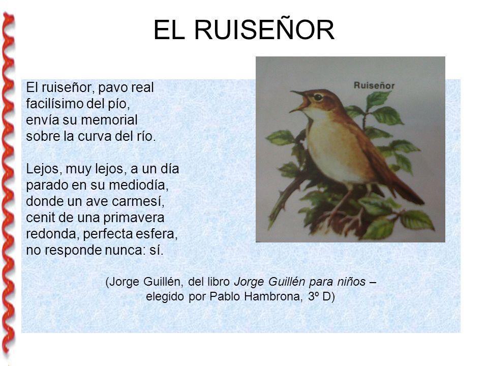 EL RUISEÑOR El ruiseñor, pavo real facilísimo del pío, envía su memorial sobre la curva del río.