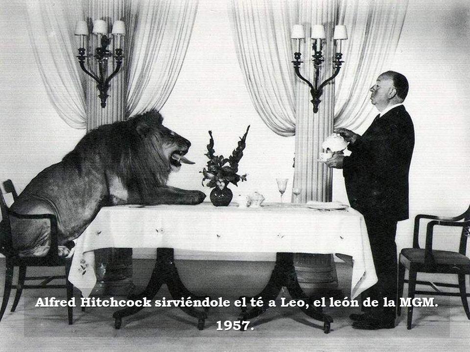 Alfred Hitchcock sirviéndole el té a Leo, el león de la MGM.