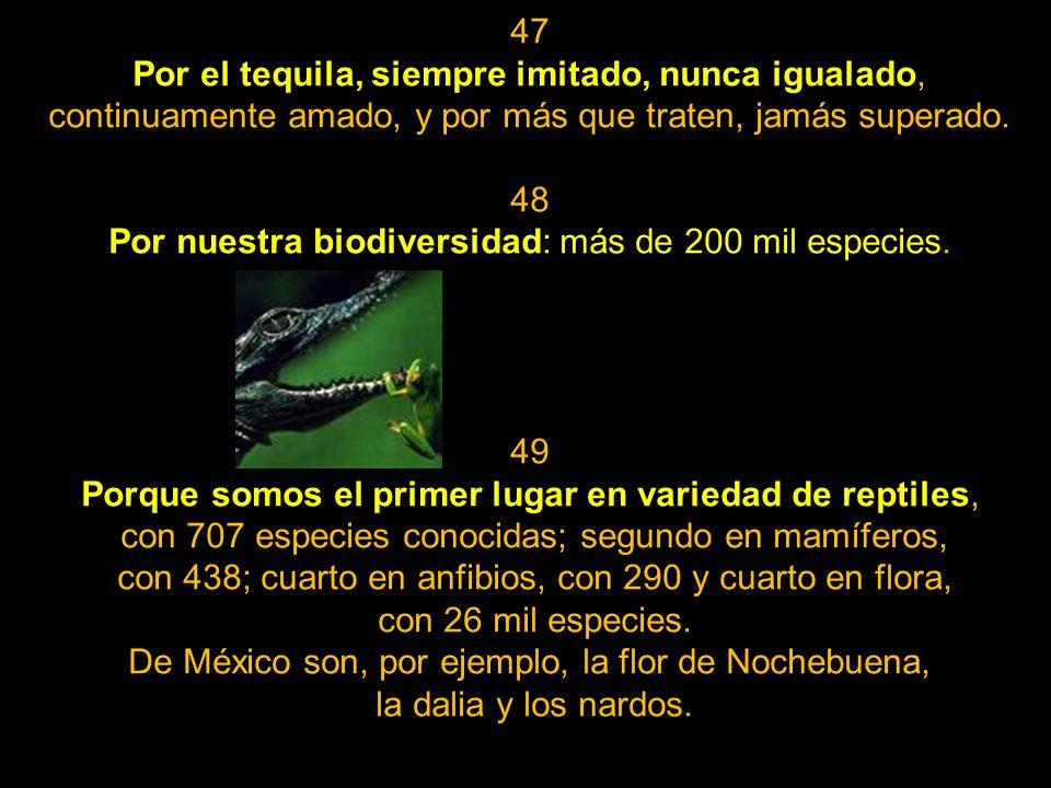 45 Por la picardía de nuestro lenguaje máximo, el albur, que sólo logramos entender y utilizar exitosamente quienes poseemos venas mexicanas. 46 Por n
