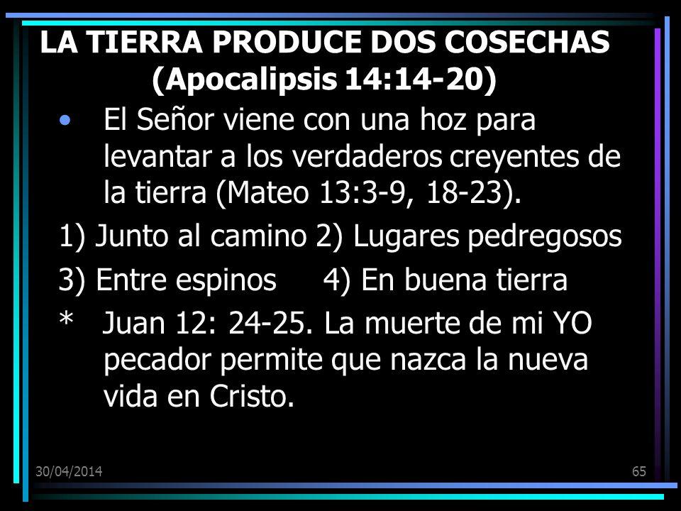 30/04/201465 LA TIERRA PRODUCE DOS COSECHAS (Apocalipsis 14:14-20) El Señor viene con una hoz para levantar a los verdaderos creyentes de la tierra (Mateo 13:3-9, 18-23).