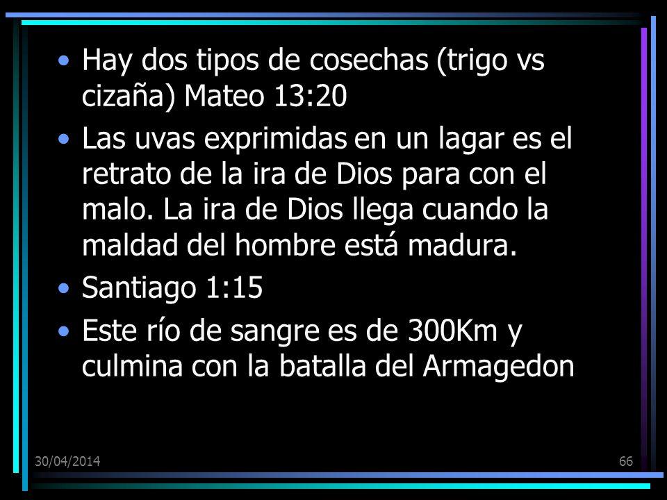 30/04/201466 Hay dos tipos de cosechas (trigo vs cizaña) Mateo 13:20 Las uvas exprimidas en un lagar es el retrato de la ira de Dios para con el malo.