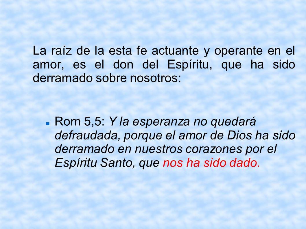 La raíz de la esta fe actuante y operante en el amor, es el don del Espíritu, que ha sido derramado sobre nosotros: Rom 5,5: Y la esperanza no quedará