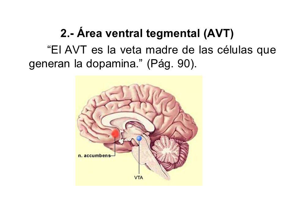 3.- Otras localizaciones cerebrales (En sujetos que llevaban más de dos años enamorados): (a) Corteza cingulada anterior
