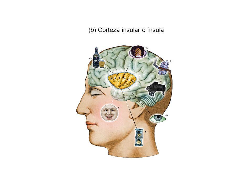 Así que llegamos a la conclusión de que a medida que una relación se alarga, las regiones cerebrales asociadas con las emociones, la memoria y la atención empiezan a responder de forma diferente.