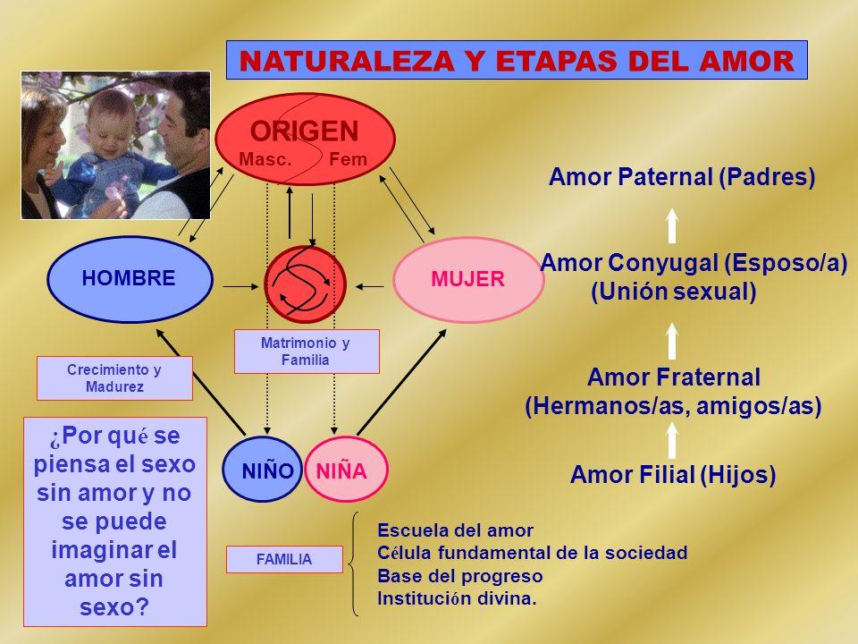 NATURALEZA Y ETAPAS DEL AMOR ORIGEN Masc. Fem MUJER HOMBRE Matrimonio y Familia NIÑA NIÑO Crecimiento y Madurez Amor Paternal (Padres) Amor Conyugal (