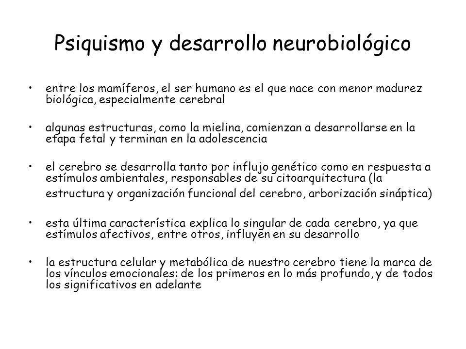 Psiquismo y desarrollo neurobiológico entre los mamíferos, el ser humano es el que nace con menor madurez biológica, especialmente cerebral algunas es
