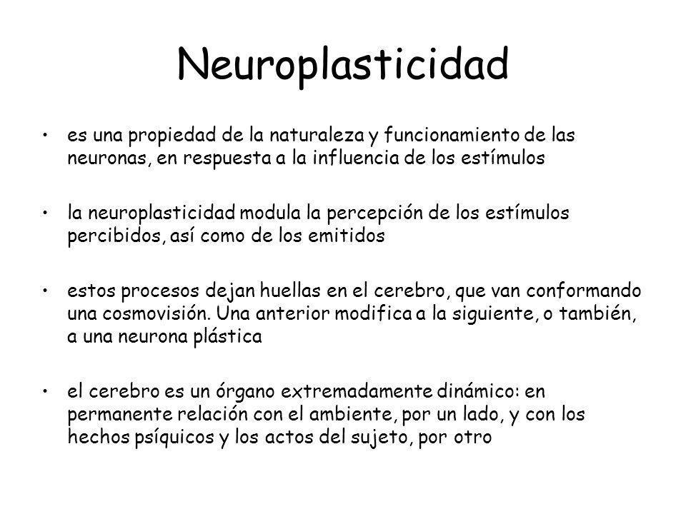 Neuroplasticidad es una propiedad de la naturaleza y funcionamiento de las neuronas, en respuesta a la influencia de los estímulos la neuroplasticidad