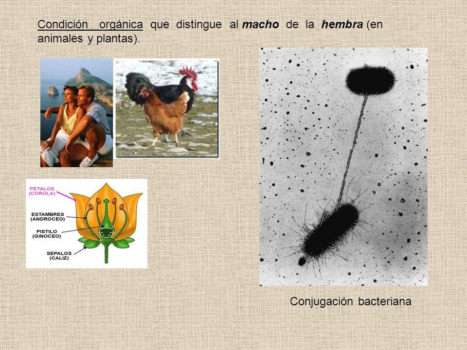 Condición orgánica que distingue al macho de la hembra (en animales y plantas). Conjugación bacteriana