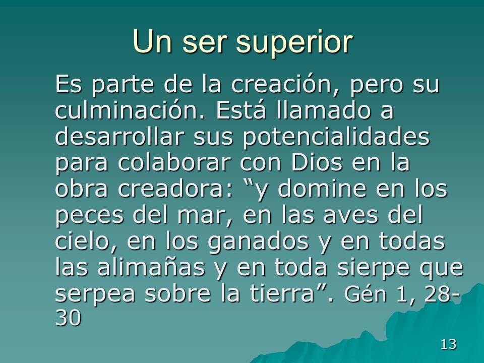 13 Un ser superior Es parte de la creación, pero su culminación. Está llamado a desarrollar sus potencialidades para colaborar con Dios en la obra cre