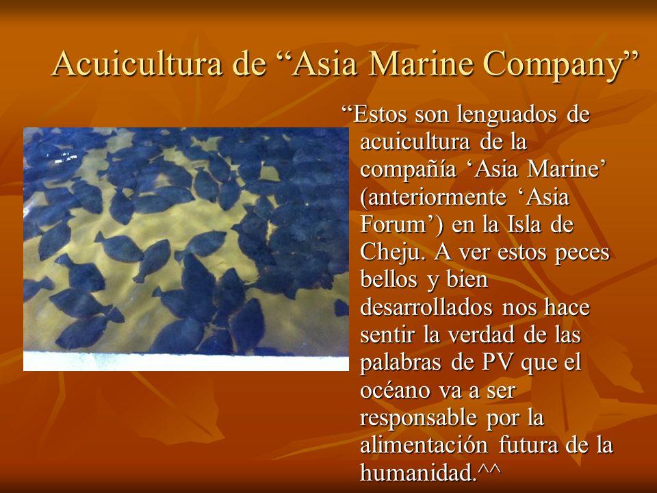 Acuicultura de Asia Marine Company Estos son lenguados de acuicultura de la compañía Asia Marine (anteriormente Asia Forum) en la Isla de Cheju.