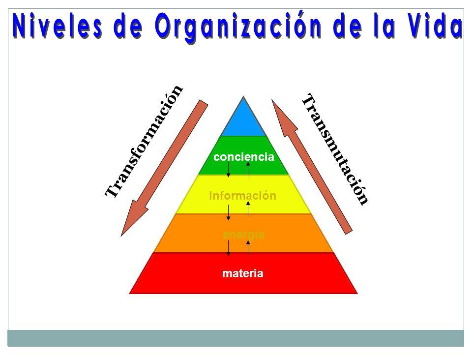 conciencia información energía materia Transformación Transmutación