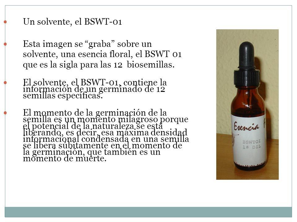 Un solvente, el BSWT-01 Un solvente, el BSWT-01 Esta imagen se graba sobre un solvente, una esencia floral, el BSWT 01 que es la sigla para las 12 bio