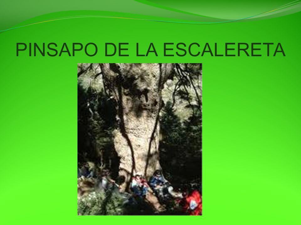 El papel reciclado En el IES Profesor Gonzalo Huesa: * Desde comienzos del curso 2.007-08 hemos realizado Campañas de recogida de papel, en enero de 2008 llevamos unos 400 Kilos recogidos.