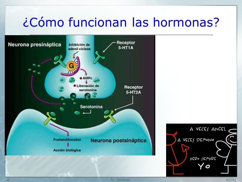 W[74] © L. Jiménez8 ¿Cómo funcionan las hormonas?