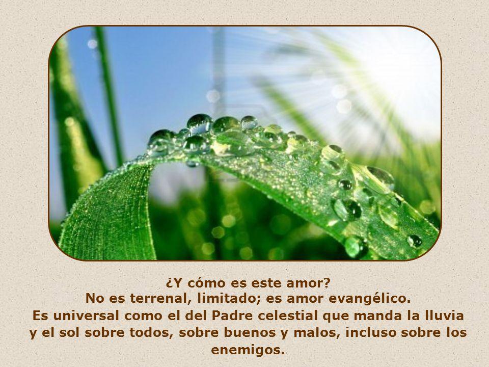 Lo hace infundiendo en nosotros el amor. Ese amor que nosotros, por deseo suyo, debemos mantener encendido en nuestros corazones.