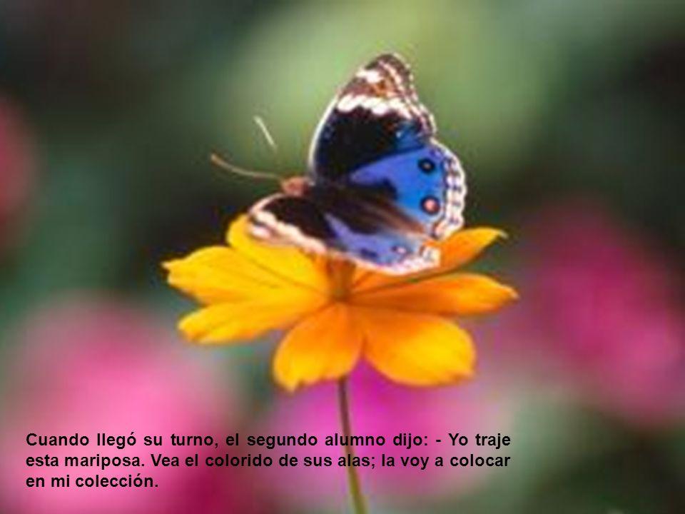 Cuando llegó su turno, el segundo alumno dijo: - Yo traje esta mariposa. Vea el colorido de sus alas; la voy a colocar en mi colección.